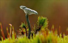 Gepind vanaf vroegevogels.vara.nl - Blauw groen trechtertjes