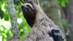 Pioneering 'diaries' reveal the secret lives of animals - BBC News