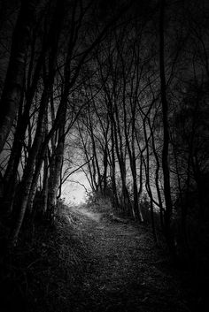 Tunnel in The Woods Tunnel im Wald Dark Photography, Black And White Photography, Wedding Photography, Disney Art Drawings, Mystical Forest, Gothic Horror, Gothic Art, Dark Places, Dark Wallpaper