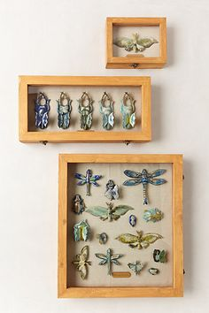 Entomology Shadowbox - make this out of other materials