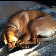 Rocky sleeping Sleep, Pets, Animals, Animales, Animaux, Animal, Animais, Animals And Pets