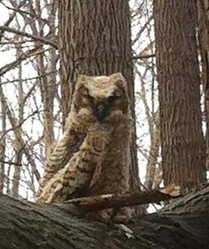 In Wheatley Provincial Park: Spotted this Owl while on walk in Wheatley Ontario.  It seemed quite friendly, and could not fly yet, and it let me get very close.   Thank you for sending