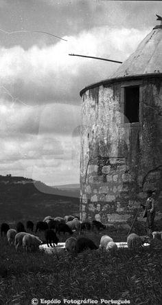 Espólio Fotográfico Português - Moínho e ovelhas Foto:#FP01663_A Data: 1933 Autor:Foto Beleza Regiao:Santarém / Beira Litoral Cidade:Ourém