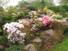 Kiviä ja kukkia...