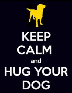 Keep calm and hug your dog. Go crazy and hug ALL the dogs! I Love Dogs, Puppy Love, Cute Dogs, Keep Calm, Stay Calm, Pet Sitter, Breast Cancer Support, Calm Quotes, Pet Quotes