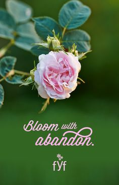 """<3 Beautiful quote: """"Bloom with abandon."""" --From You Flowers #inspirational #wisdom"""