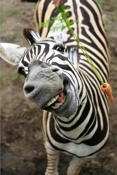 Just my favorite animal. Cute, right?