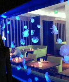 Aquarium - jellyfish tank at Steak 954 Restaurant, W Fort Lauderdale, Florida USA Cool Fish Tanks, Saltwater Fish Tanks, Saltwater Aquarium, Aquarium Fish Tank, Jellyfish Tank, Jellyfish Aquarium, Jellyfish Facts, Jellyfish Quotes, Jellyfish Light