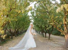 Bride-at-Vineyard-Wedding-600x439.jpg (600×439)