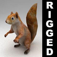 3D Rigged Squirrel Model - 3D Model