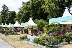 Budget Food Tips Buy Plants, Large Plants, Rhs Hampton Court, Fairs And Festivals, Annual Flowers, Unusual Plants, Garden Show, Different Plants, Plant Sale