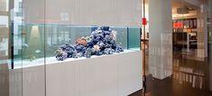 Blogbeitrag Meerwasseraquarium kaufen neu oder gebraucht