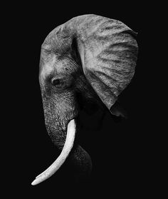 -- - Black Elephant - Black Elephant - Photos fond ecran iphone 6 noir et blanc page 4 is there a future for me? Dit schilderij is beschikbaar op gebor.