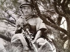 Japanese sniper in pine tree, 1942 Imperial Japanese History