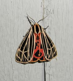 omg tiger moths are the coolest.