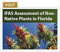The UF/IFAS Center for Aquatic and Invasive Plants is a multidisciplinary research, teaching and extension unit directed to develop environmentally sound techniques for the management of aquatic and natural area weed species and to coordinate aquatic plant research activities within the State of Florida.