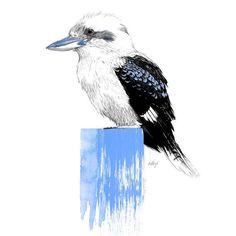 Chuckles the Kookaburra illustration, Fine Art Print, Drawing, Sketch, Australia. By Incandescent Design www.incandescent.design