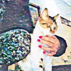 La mia cucciola che aspetta la pappa! . . . . . #cat #cats #catsofinstagram #catstagram #love #kitty #kitten #instacat #catlover #cute #pet #meow #catoftheday #catlovers #instagood #pets #kittens #animals #animal #ilovemycat #lovecats #catsagram #instagramcats #猫 #petstagram #adorable #catlife #cats_of_instagram #kittycat #ねこ
