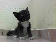 TO BE DESTROYED 5/31/14Brooklyn CenterMy name is SAL. My Animal ID # is A1001113.I am a male black and white amer sh mix. The shelter thinks I am about 4 WEEKS old.I came in the shelter as a STRAY on 05/27/2014 from NY 11420, owner surrender reason stated was STRAY. I came in with Group