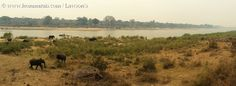 Lower Sabie camp view during spring fire season. Kruger National Park, Iwc, Camps, Country Roads, Seasons, Spring, Outdoor, Travel, Africa