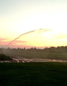 The Sosnicki Organic Produce Blog: Beautiful July on the farm!