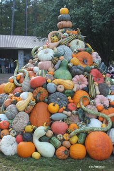 Crazy pile of gourds. Fall Images, Fall Pictures, Best Pumpkin Patches, Fall Halloween, Halloween Images, Pumpkin Squash, Pumpkin Farm, Fall Fest, Fall Decor