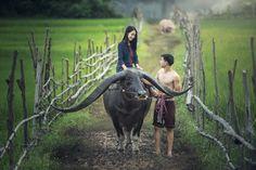 Couple farmer with buffalo