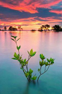 Howard Springs, Darwin, Northern Territory