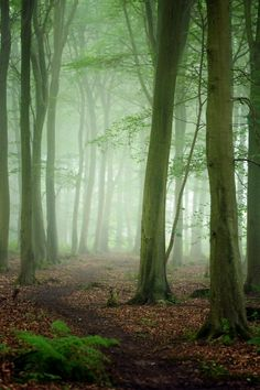 Friston Forest | England (by Alan MacKenzie on Flickr)