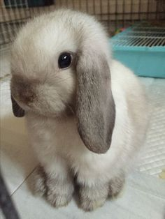 Pictures Of Cute Animals To Draw Easy; Really Cute Animals Videos or Cute Small Animals Videos. How To Draw Simple Cute Animals In Chibi Style her Cute Baby Zoo Animals Coloring Pages Baby Animals Pictures, Cute Animal Pictures, Animals And Pets, Small Animals, Zoo Animals, Wild Animals, Mini Lop Bunnies, Cute Baby Bunnies, Holland Lop Bunnies