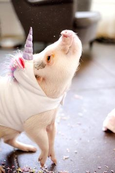 Meet Hamlet the piglet. Hamlet (aka Hammy) is also a unicorn. This Piglet Dressed As A Unicorn Is Making Everyone Cry Rainbows Cute Baby Animals, Animals And Pets, Funny Animals, Super Cute Animals, Teacup Pigs, Mini Pigs, Cute Pigs, Tier Fotos, Animals Beautiful