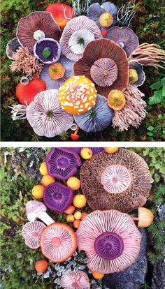 Mushroom photography by Jill Bliss // mushroom foraging // nature photos