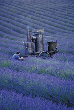 Distilling lavender right in the field in Provence, France. Lavender has a calming herbal fragrance. Olivier Baussan by LOccitane en Provence. French Lavender, Lavender Blue, Lavender Fields, Lavender Ideas, Lavender Garden, Roses Garden, Loccitane En Provence, Beautiful World, Beautiful Places