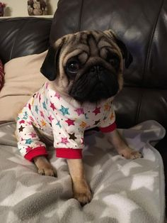 Pug in pajamas... or pugjamas, if you will.