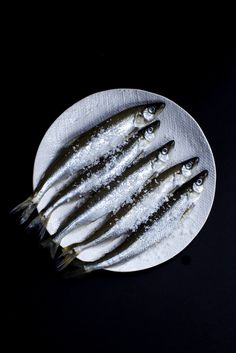 FORMAT PORTFOLIO-HORIZON THEME. VERY COOL whitney ott, whitney ott photography, photography, food, food photography, fish, sardines, salt, dark, still life