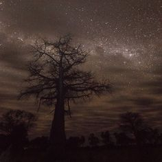 """13.2k Likes, 101 Comments - Mattias Klum (@mattiasklumofficial) on Instagram: """"A Baobab tree and the milky way, Botswana. Baobabs trees store water in the trunk (up to 120,000…"""""""