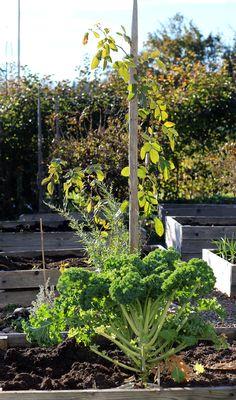 puutarha: Kipparin morsian