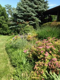Beautiful front garden, filled with flowering shrubs, perennials and bordered with liriope!