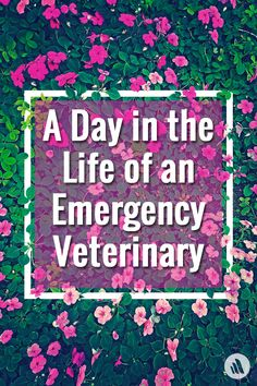 The first thing one learns about working in an emergency veterinary clinic is that no two nights are ever the same.