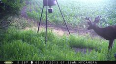 2013 buck pictures from our field cam