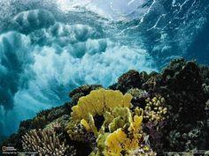 Terumbu di lepas pantai Arab Saudi di Laut Merah utara, yang jarang dikunjungi, termasuk daerah yang paling tak terjamah di wilayah ini. Sinar matahari menembus air jernih, sehingga taman rimbun karang tumuh subur di sepanjang pesisir yang dimandikan ombak.