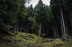 """Hellesylt Woods"" by Samuel Viani"