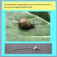 Reme Bayarri. Proyecto Infantil Caracoles .Desplazamiento de los caracoles.