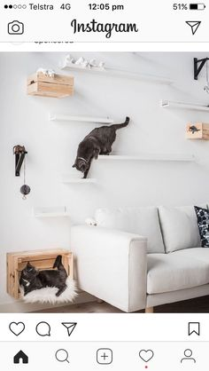 IKEA cat shelves.