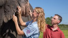 To go with The One and Only Ivan - Newsela | Elephants have more anti-cancer genes than people