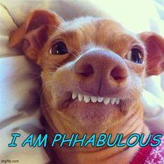 Trendy Ideas For Memes Dog Phteven Funny Animal Memes, Dog Memes, Funny Animal Pictures, Cute Funny Animals, Funny Images, Funny Dogs, Cute Dogs, Dog Funnies, Dog Humor