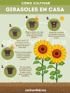 Veg Garden, Garden Plants, Spring Scenery, Growing Sunflowers, Over The Garden Wall, Plant Information, Starting A Garden, Aromatic Herbs, Beautiful Gardens