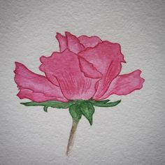 lovecold art / watercolor rose