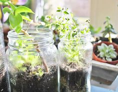 Terrariums | 10 Truly Excellent Ways To Use Mason Jars