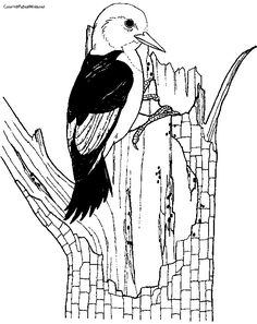 Woodpecker Coloring Pages Coloring Pages For Kids Bird